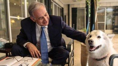 لیبر مین نے اسرائیلی وزیراعظم نیتن یاہو کو کتا کہہ ڈالا