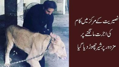 نصیریت کے مرکز میں کام کی اجرت مانگنے پرمزدور پر شیر چھوڑدیا گیا