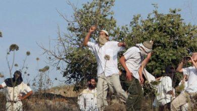 صیہونیوں کا فلسطینی کسانوں پر حملہ، غزہ گذرگاہ سے تاجر گرفتار